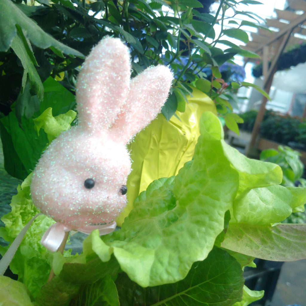 easter bunny plants on sale at redvalley plants
